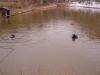 car-in-pond